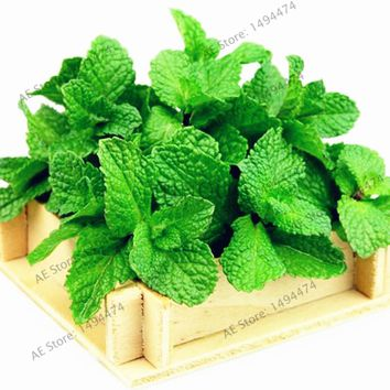 100pcs/bag Mint Seeds,potted perennial herb,edible organic seeds vegetables for home and garden