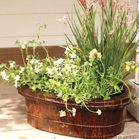 Vintage Wash Basin Planter - Garden - New - NapaStyle