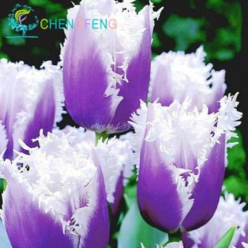 10pcs/bag tulip plants Rare bonsai flower plants ice cream as beautiful tulips potted perennial home gardens tulip pants