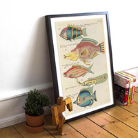 Fish Poster| Sea Life Art| Taxonomy Wall Art| Fishes Wall Art| Fishes Print| Animal Poster| Natural History| Vintage Zoology| HAP015