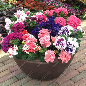 100 pcs/bag double petals petunia seeds bonsai flower seeds Short height garden flowers seeds indoor or ourdoor plant pot