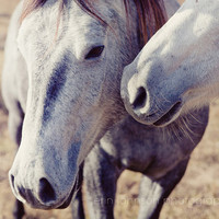 horse photo two horses white decor farm photography decor rustic wall art nature photograph Horse Kisses 8x10