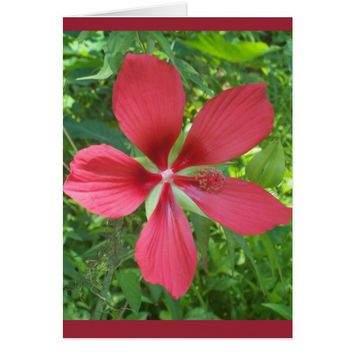 Red Hibiscus Flower Blank Note Card