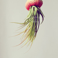 3 Coral OMBRE Jellyfish Air Plant // Orange Sherbert by PetitBeast