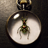 Spotted Beetle Specimen Pocket Watch Ossuary Green Metallic Bug