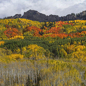 Colorado Kebler Pass Fall Foliage Print