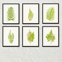 Vintage Ferns Botanical Print Set No. 1