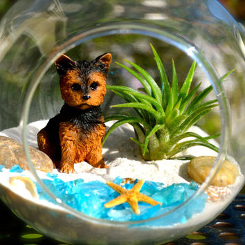 Dog Terrarium Kit ~ Glass Hanging or Sitting Terrarium with Air Plant ~ Cute terrier at Beach ~ Starfish ~ Beach Terrarium ~ Gift Idea