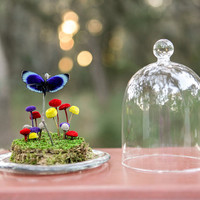 Butterfly Terrarium Kit, Real Butterfly Under Glass Dome, Dry Terrarium, Mod Buttons