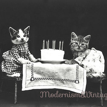 DIGITAL DOWNLOAD Ephemera.Instant download.Vintage Cats happy birthday greeting image card.Birthday card.Cat photography for printing.