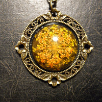 Sunny Yellow Queen Annes Lace Preserved Specimen Necklace