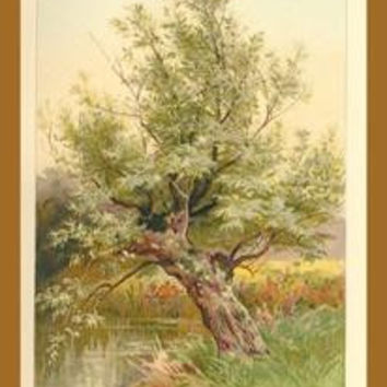 Willow Tree: Fine art canvas print (12 x 18)