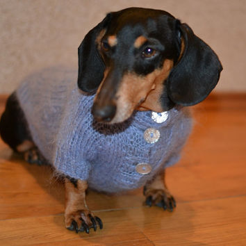 SALE  Cornflower blue dog Sweater Clothes Hand Knitting  dachshund medium dog fluffy cable Mohair