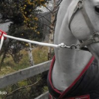 Idolo Tether Tie -  Prevents neck injuries when tying up horses - From the UK