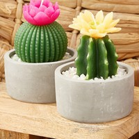 Cactus Candle in Cement Pot