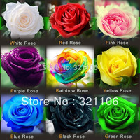 1080 Rose Seeds 9 Packs Each Color 120 Seeds -DIY Home Gardening Pot Balcony & Yard Fragrant Flower Plant Bonsai Decoration