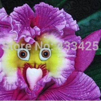 rare 10 kinds of the seeds of the world's rare orchids, 80 seed mixed color orchids, potted orchids