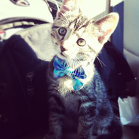 Kitten Retro Batik Breakaway Bowtie Collar For Cats