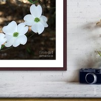 Dogwood by Andrea Anderegg Photography