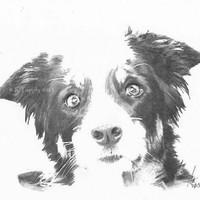 Gorgeous Border Collie Puppy Pencil Sketch Art Print 11.5x8.5 Sheep Dog Picture Open Edition inc Certificate of Authenticity