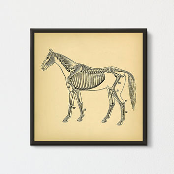Horse Skeleton Printable, Horse Wall Art Poster, Square Print, Antique Horse Illustration, Horse Skeleton Drawing, Horse Art, Horse Decor