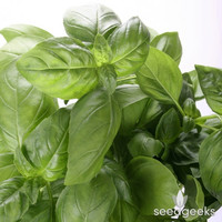 Italian Large Leaf Basil Herb Heirloom Seeds - Non-GMO, Open Pollinated, Untreated
