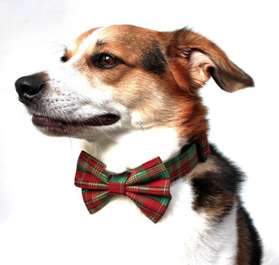 Christmas Dog Collar and Bow Tie / from CreatureCollars on Etsy