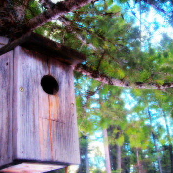 Montana Fine Art Birdhouse Photography Home Sweet Home Nature Photography Down-Home Photography Prints Montana Photography OFG Team FTTeam