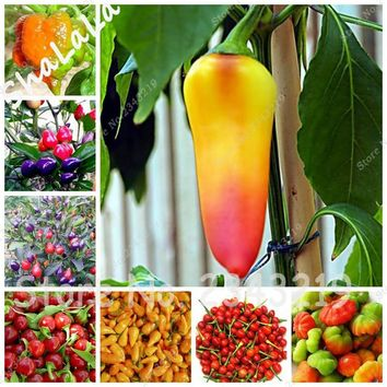 Heirloom Thailand Pepper Seeds Capsicum Annuum Garden Decor Plants Chili Seeds 100 Pcs Bonsai Tree Vegetable Good for Cooking