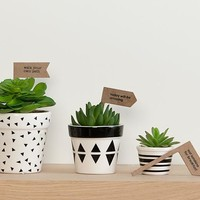 potted plant set