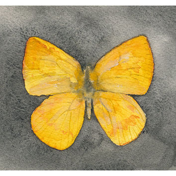 Lemon Yellow Butterfly - archival print of watercolor painting - Catopsilia Pomona, 4 X 5 inches