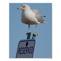 Seagull Photo Poster