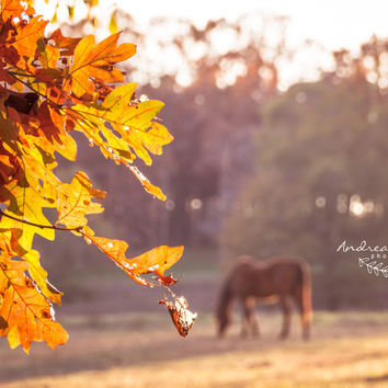 Autumn Feelings by Andrea Anderegg Photography