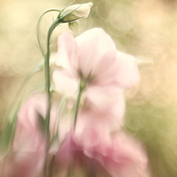 Flower photography nature photography feminine wall art home decor idea wall hanging fine art print floral photo print pale pink green