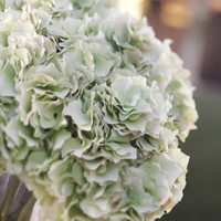 Hydrangea Stem - Green - Set of Four