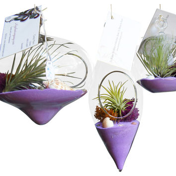 3 Purple Hanging Airplant Terrariums