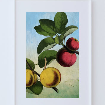 Kitchen Wall Art Apple Apricot Print Kitchen Print Food Photograph Fruit Print Vintage Botanical Art Retro Kitchen Art Kitchen Wall Decor