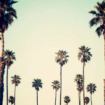 "Los Angeles Palm Trees, Retro, California Decor, Palm Trees, Landscape Photograph, California Wall Art, Large Wall Art ""California Love"""