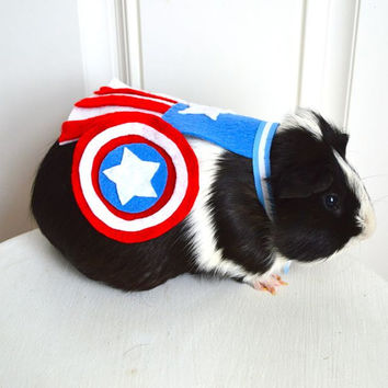 Captain America costume guinea pig / chinchilla. The Avengers. Pet Halloween costumes by Marmota Café.