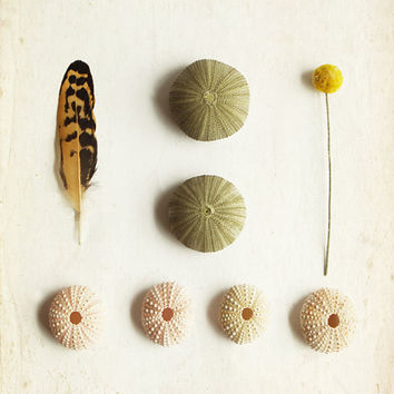 Feather Art Photography with Sea Urchin par lucysnowephotography