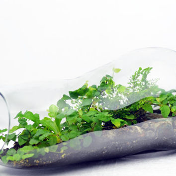 Double Bubble Terrarium // Home Decor // Green Gift // Woodland Terrarium
