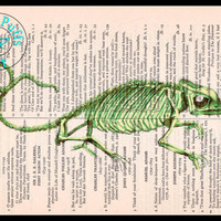 Green Lizard Skeleton Drawing Beautifully Upcycled Vintage Dictionary Page Book Art Print