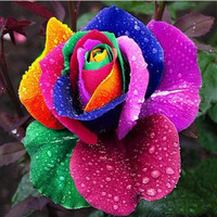Bonsai seeds 600 PCS black rose Flower Rainbow rose seed Rose Seeds Flower pots planters ,12 Kinds Of Seeds, Rainbow rose seeds bonsai seeds