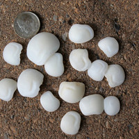 Lucky Stones~ Otoliths~Jewelry Supplies~ Craft Supplies~Bohemian Style~Genuine Surf Tumbled Lake Erie