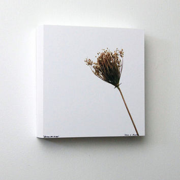 Queen Anne's Lace, Winter Flower, White and Brown, Minimalist Wall Art, 8X8 Wood Panel, Nature Photography, Wall Hanging, Ready to Hang