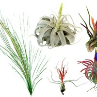 Large Airplant Grab Bag