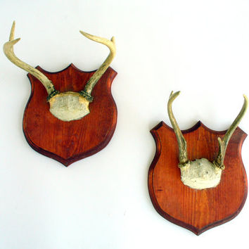 Vintage Antler Mount on Wood Shield Taxidermy Instant Collection