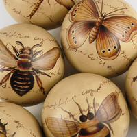 Set of 6 Entomology Porcelain  Balls $19