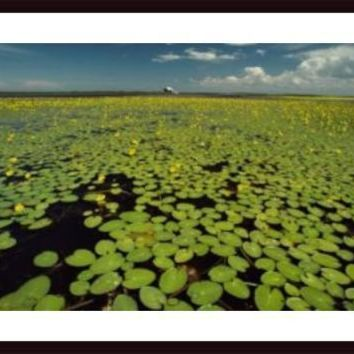 A River Delta Filled With Lily Pads, framed black wood, white matte