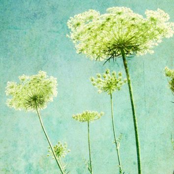 Flower photography  - Aqua blue wall art - Nature photography  - Queen Annes lace - lime green decor Botanical Art  8x10 - Looking up
